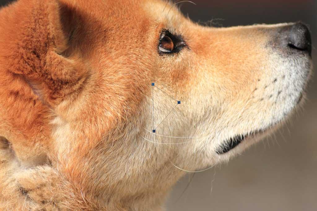 ポリゴン犬