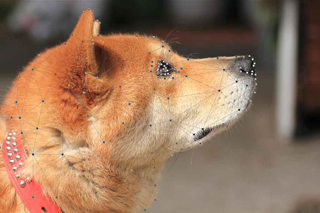 ポリゴン犬2