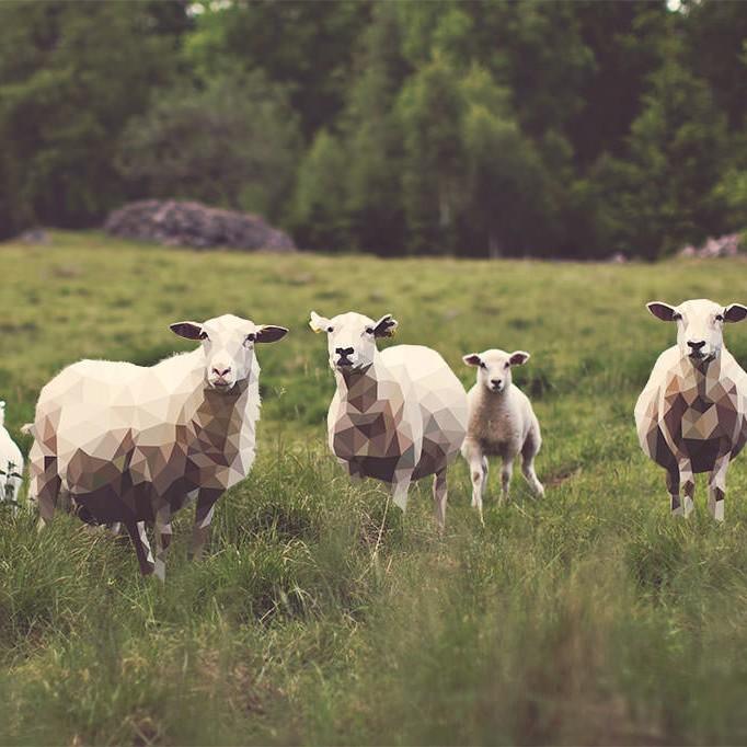 catch-sheep